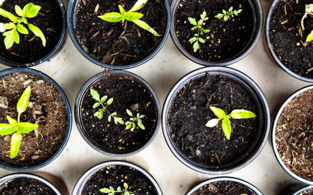 Consigli pratici per vivere in modo sostenibile