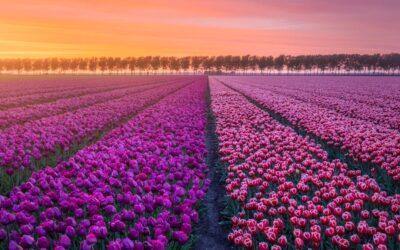 Il risveglio della natura nei Paesi Bassi, Albert Dros