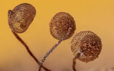 L'architettura dei funghi fotografata da Alison Pollack